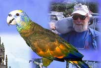 St. Vincent, Bill Tewes, scuba diving, West Indies, Dive Guide, Dive Resort, seahorse, coral reef, waterfall